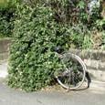 自転車としては、利用不可能?