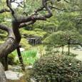 池庭と松の古木