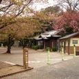 走井山公園の葉桜