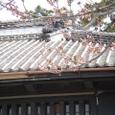咲き始めた桜と旧・諸戸邸