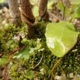 苔の世界(その2)