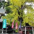 大福田寺の大銀杏