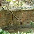煉瓦塀に生えた木の根