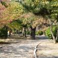 初秋の九華公園
