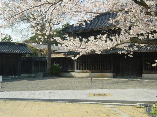 旧・諸戸精六邸玄関前の桜