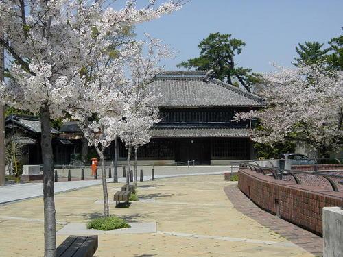 旧・諸戸精六邸と桜