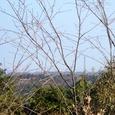 金比羅山から津市街を望む