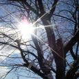 桜,青空,陽の光