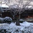 照源寺の庭