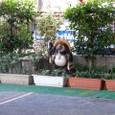駐車場の管理狸
