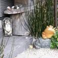 蛙と同居の狸