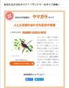 Suntorybird